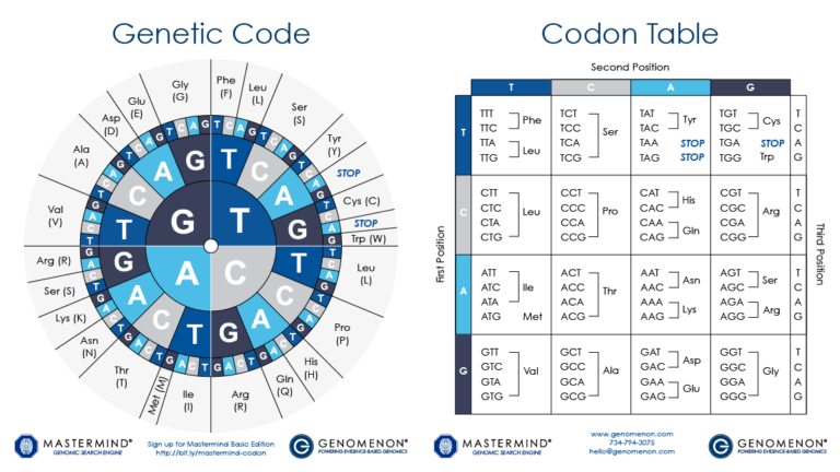 cDNA Codon Genetic Code Amino Acid Chart